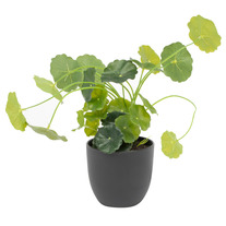 24cm Money Bag Artificial Plant